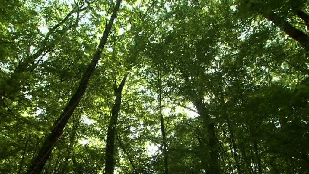 illustration vidéo Forêt de la Comté