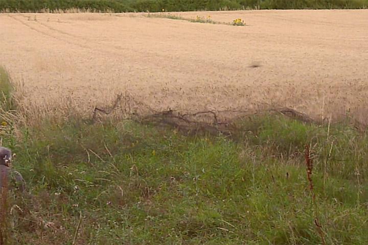 Visuel vidéo Capture cailles des blés